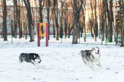 Photo by Kateryna Babaieva on Pexels.com